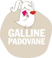 Galline Padovane