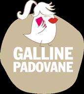 Galline Padovane